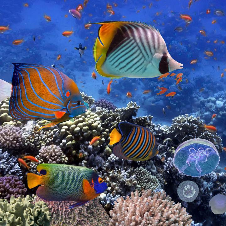 都内とその周辺のリニューアルしてさらに楽しめる水族館で家族のお出かけを楽しもう