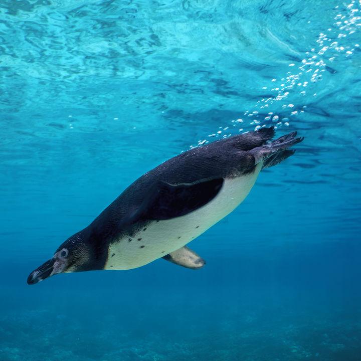 大阪周辺の水族館の値段はいくら?施設別の値段とお得なクーポン情報