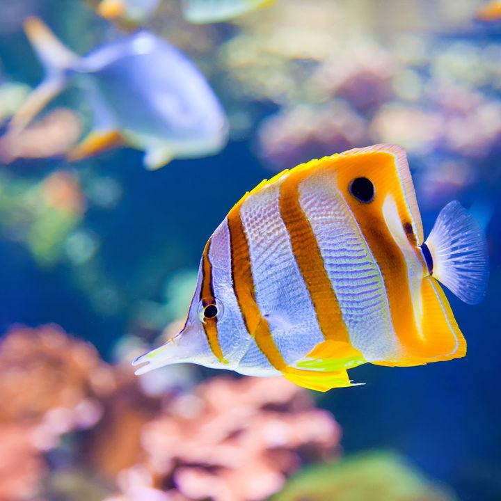関西の水族館。お正月も家族でお出かけを楽しもう