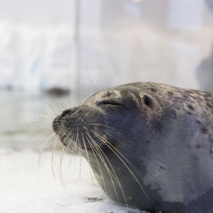 神戸周辺の水族館で生き物に触れる体験。子どもといっしょに海の生き物を間近で感じよう
