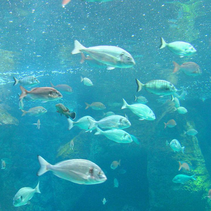 兵庫周辺の赤ちゃん連れで楽しめる水族館でたくさん楽しもう