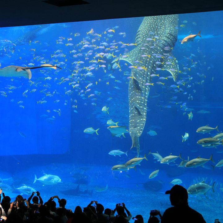 北海道の水族館のおすすめランキング。子連れにおすすめのスポット