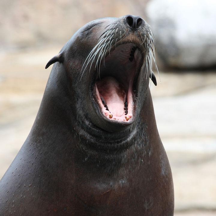 兵庫周辺の水族館。餌やりプログラムで海の生き物を体感しよう