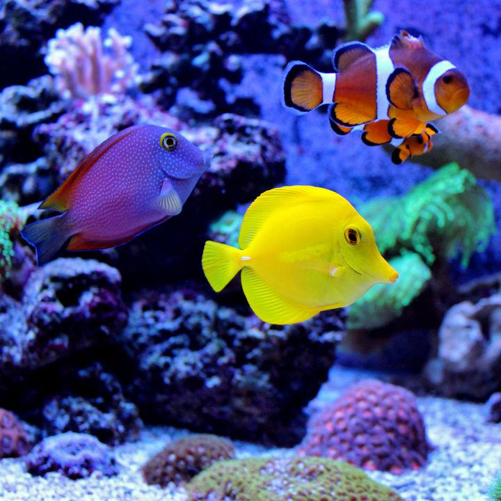 関西の水族館おすすめランキング。ママ目線で選んだスポットを紹介