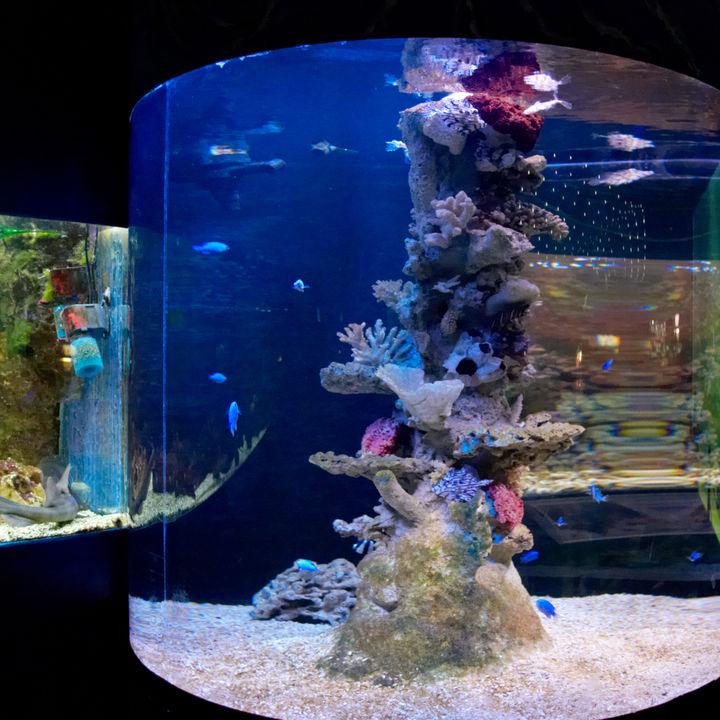 関西観光スポット付近の水族館。水族館も観光も楽しめる子連れにおすすめのスポット