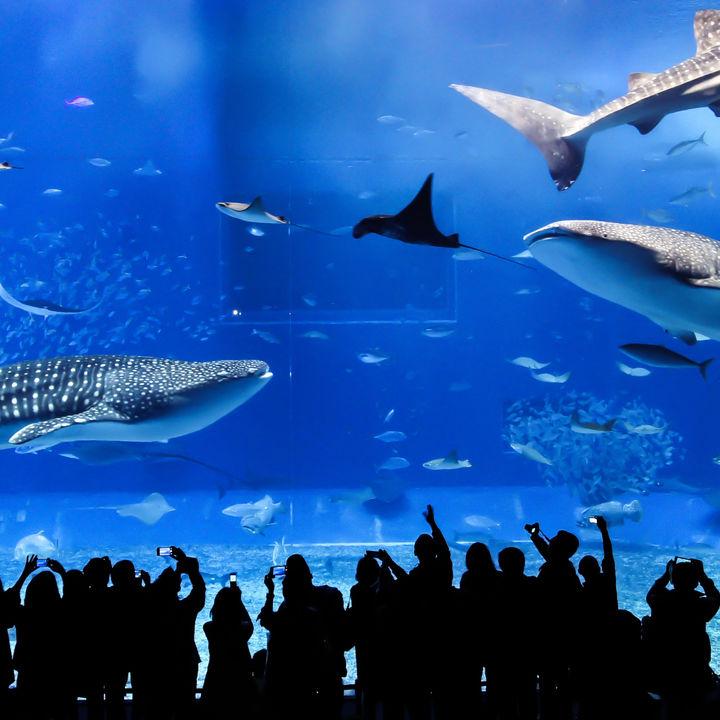 兵庫周辺の水族館をランキングで紹介。ママ目線で選んだおすすめのスポット