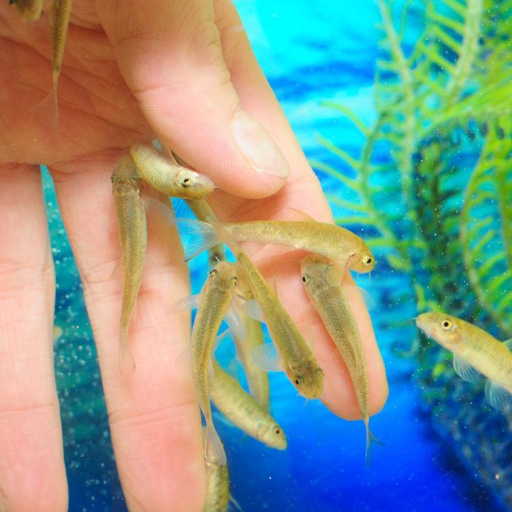 九州のふれあい体験のできる水族館。家族のお出かけで生き物とたくさんふれあおう