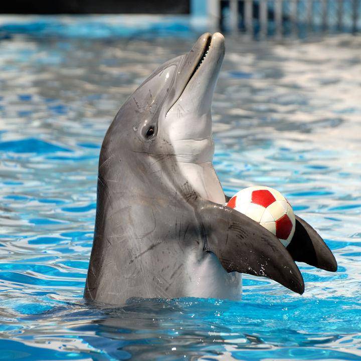 北陸の水族館のイベント情報。親子で楽しめるショーやプログラムを調査