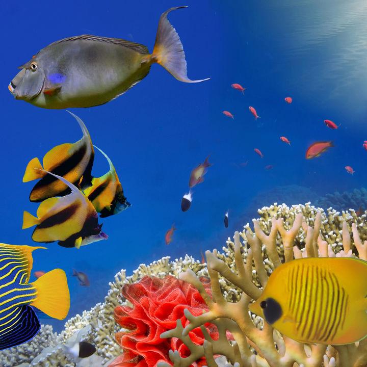 北陸周辺でクーポン情報がある水族館について。親子でお出かけを楽しもう