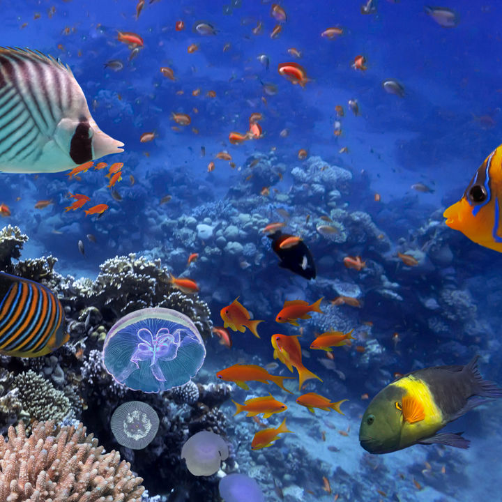 日本でお正月に営業している水族館は。家族みんなで楽しもう
