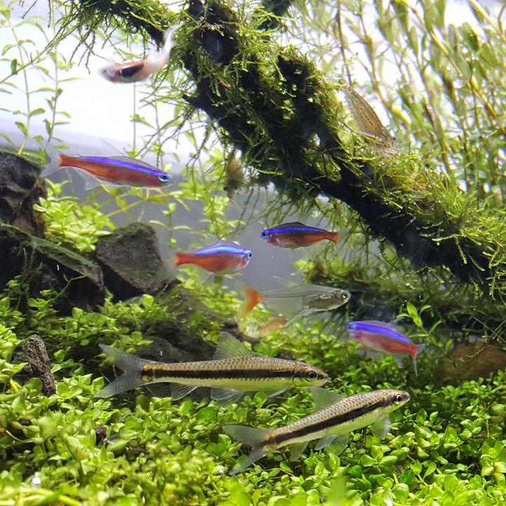 日本国内の公園が近くにある水族館。家族で思い切り遊ぼう