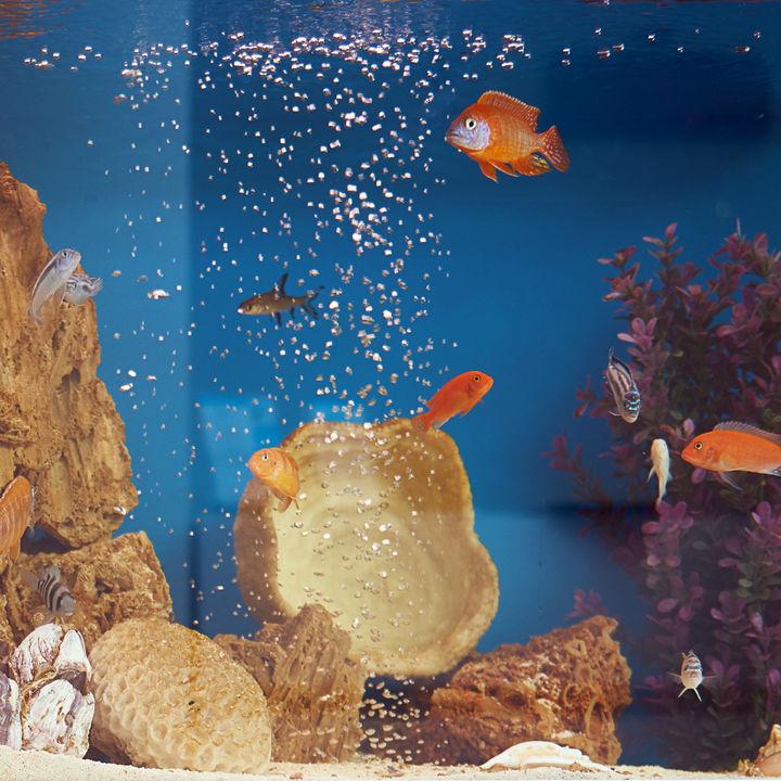 日本国内のペットと一緒に楽しめる水族館。子どもも喜ぶ水族館は