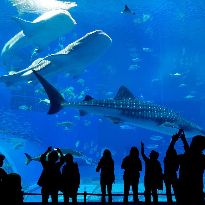 日本各地の水族館。チケットの値段やクーポン情報など、子連れにおすすめのスポット