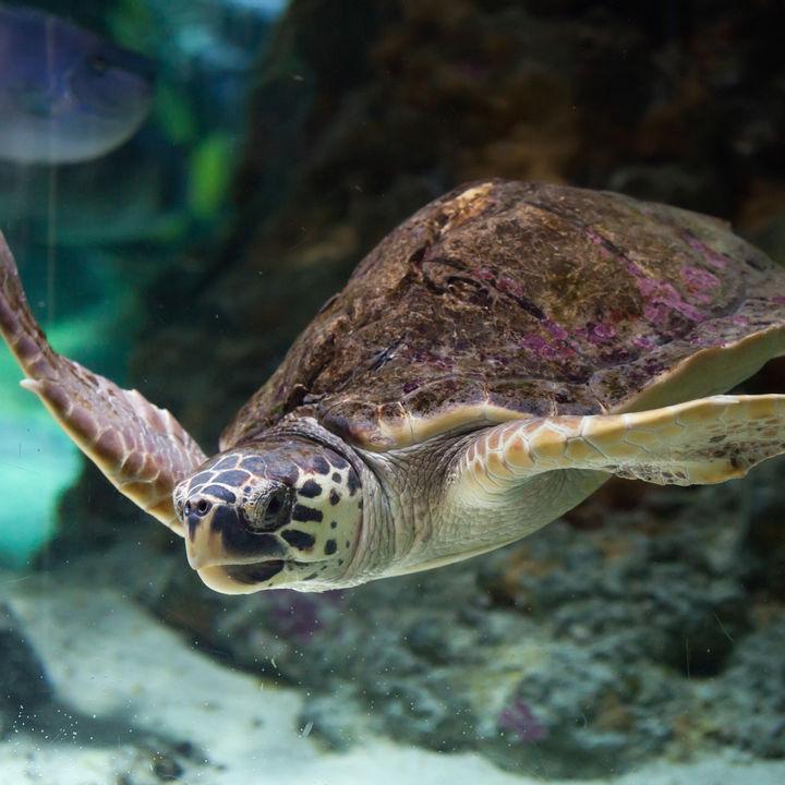関西の水族館でふれあい体験をしよう。子連れで楽しめるイベントを紹介