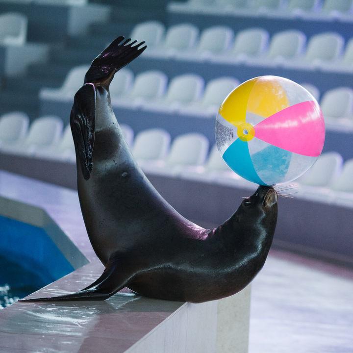 日本各地のイベントが魅力的な水族館。子どもが喜ぶショーや体験イベント