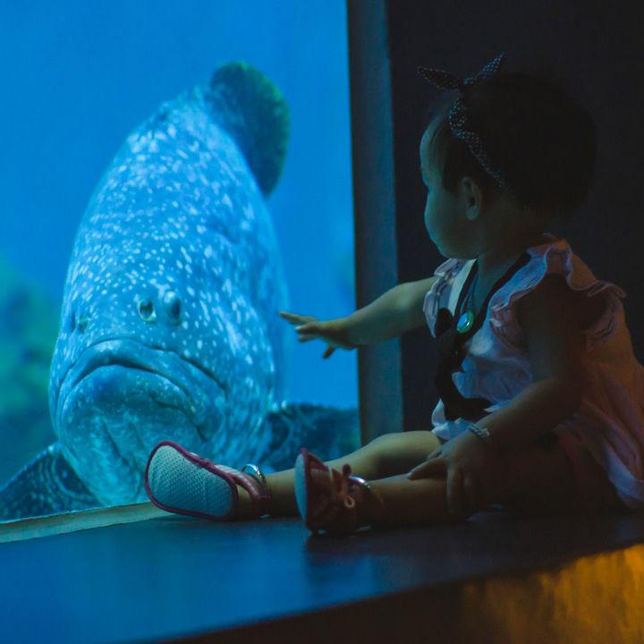 四国周辺の水族館。ママ目線で選んだ赤ちゃんも楽しめるおすすめのスポット