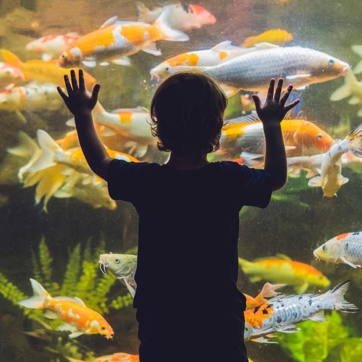 四国周辺の水族館の値段。各スポットの値段やお得なクーポン情報などを紹介