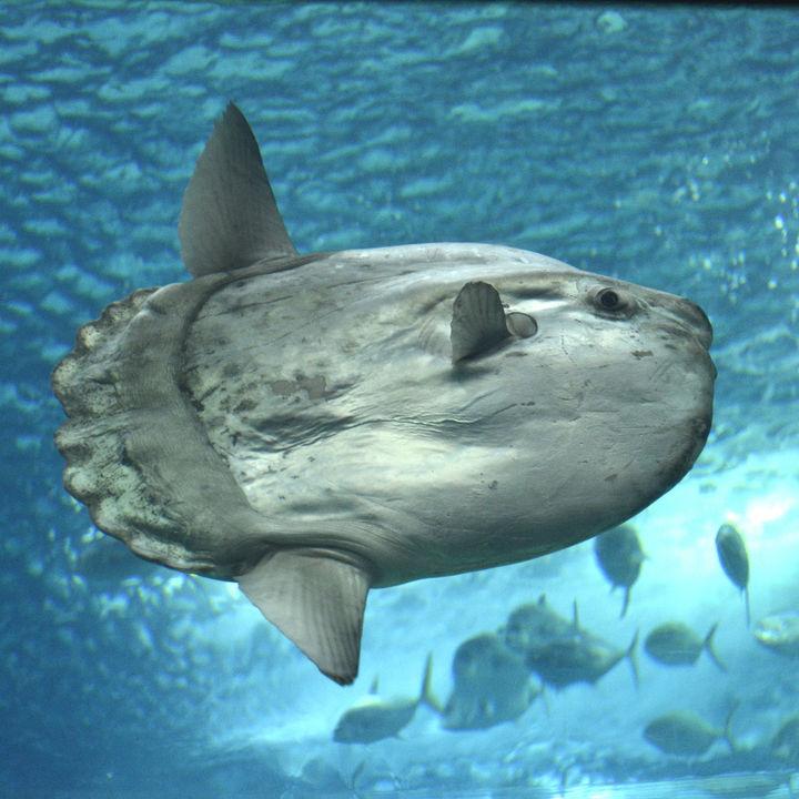 四国周辺で展示を工夫している水族館。たくさんの種類や珍しい生き物など話題のスポット