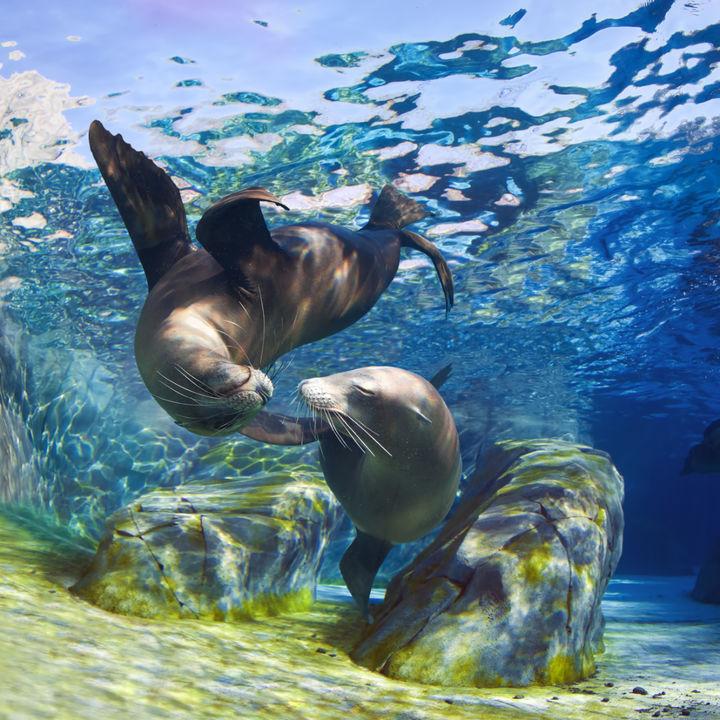 ファミリーにおすすめ!四国で正月に営業している水族館!