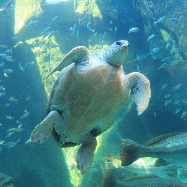 日本国内で亀がいる水族館。子連れにおすすめのスポット