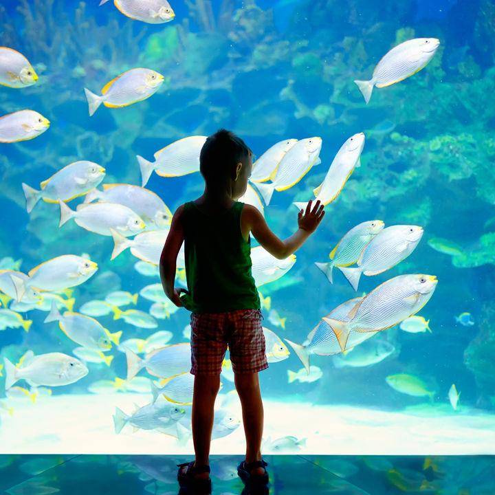 四国周辺で元旦から営業している水族館はある?子連れにおすすめのスポット