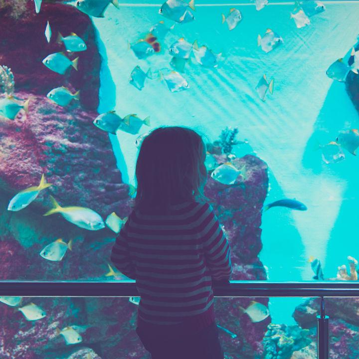 関東でナイトアクアリウムが見られる水族館はここ。夜の彩りを楽しんでみよう