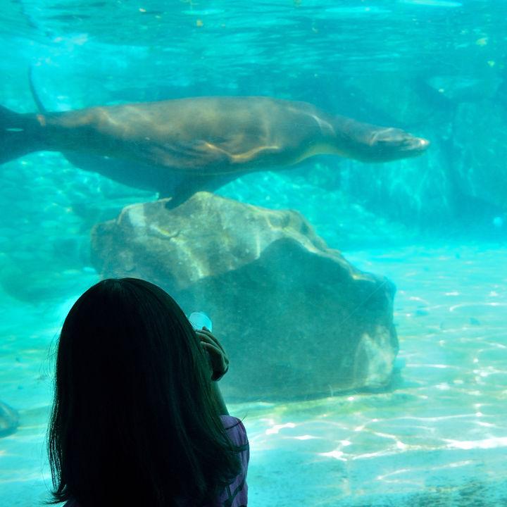 関東にある水族館の値段を調査。お得なクーポン情報などもご紹介