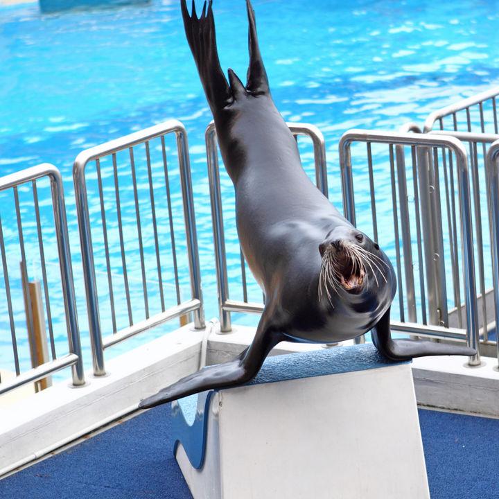 家族のおでかけにおすすめ!関東で正月に営業している水族館