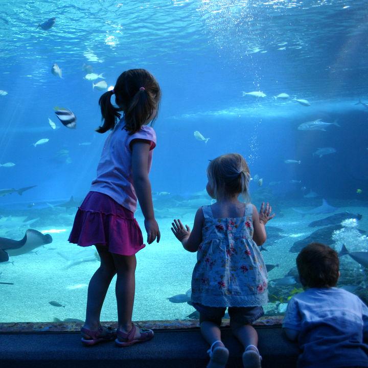 関東の水族館。ママ目線で選んだ子連れ観光におすすめのスポット