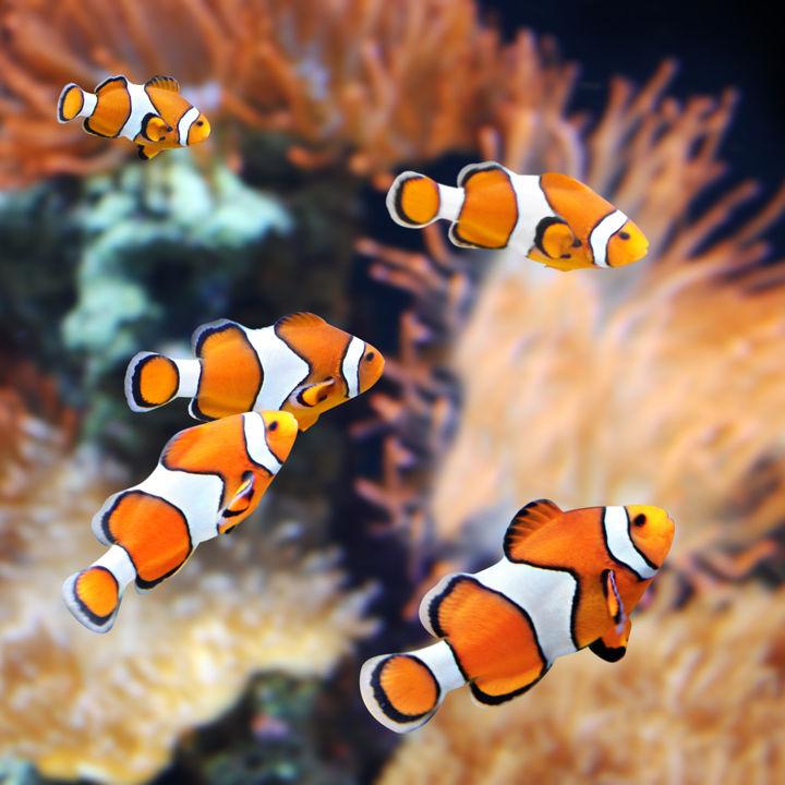 関東の水族館をランキングで紹介。子ども連れにおすすめのスポット