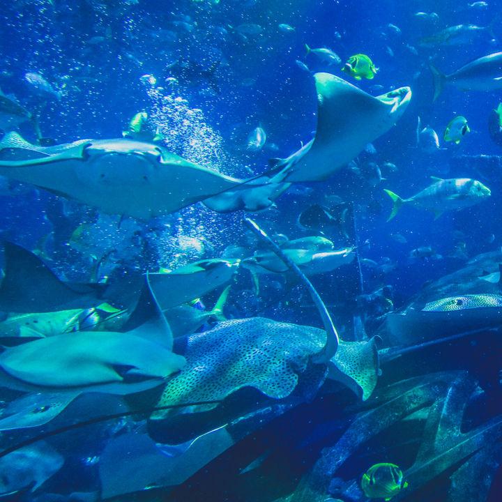 広島周辺の水族館は年始いつから営業している?冬休みに楽しめるお出かけスポット