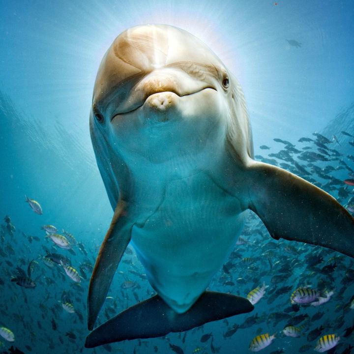 九州でクーポン情報のある水族館はどこ?子連れのおでかけに最適なスポット