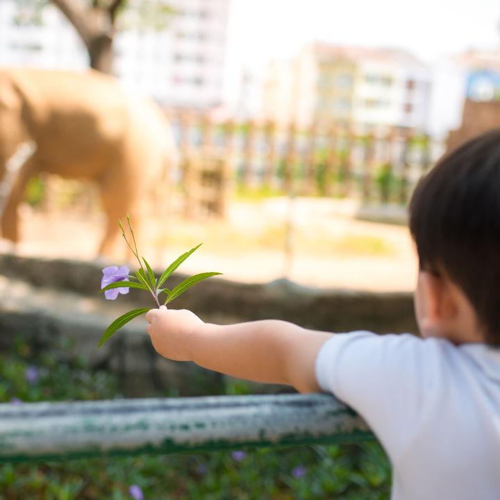 大阪で赤ちゃん連れでも楽しめる動物園はどこ?授乳室やおむつ交換台などある5園
