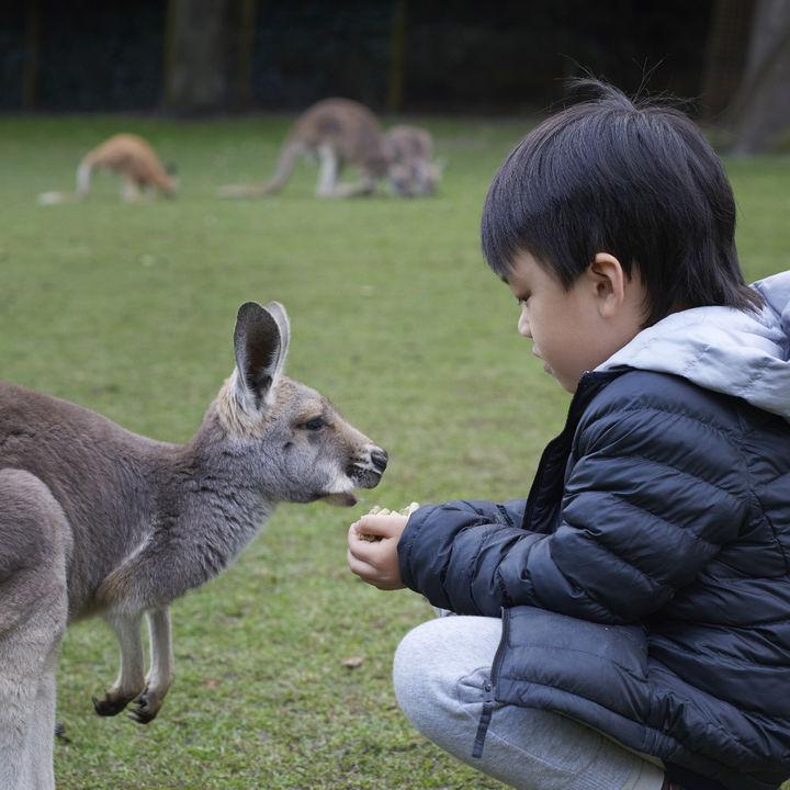 大阪のえさやり体験ができる動物園。子ども行って楽しめるおすすめの園