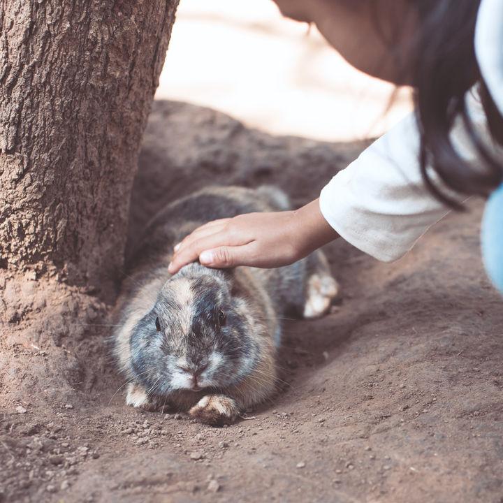 家族で楽しめる、大阪でふれあい体験ができる動物園
