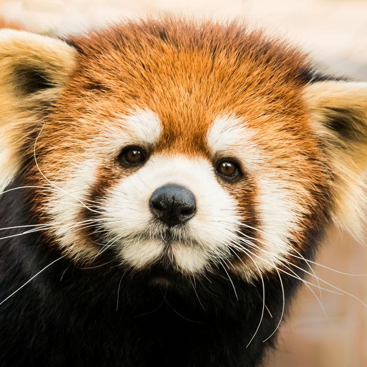 東京の動物園ランキング。子どもとのお出かけにぴったりの動物園は