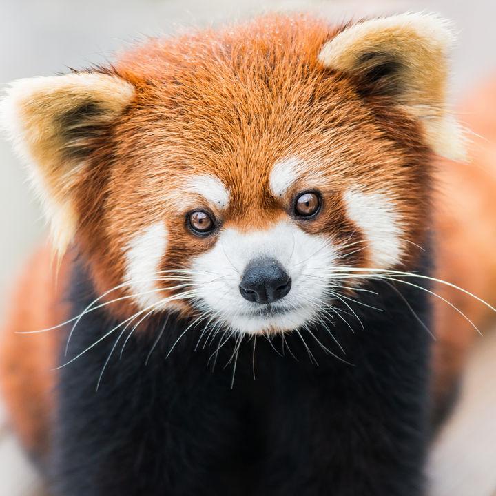 横浜で正月に営業している動物園。子連れ向きのスポットとは