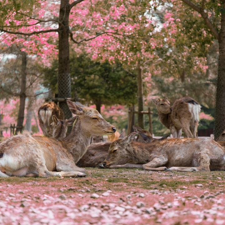 神奈川周辺の無料で楽しめる動物園。無料開放日や無料で入園できるところへ行ってみよう