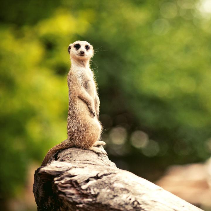 神奈川でお正月に営業している動物園について。子どもといっしょに楽しもう