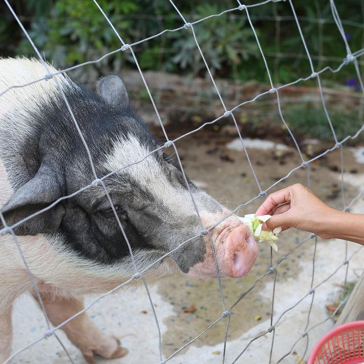 東京の動物園で餌やり体験。親子で動物を間近で観察してみよう