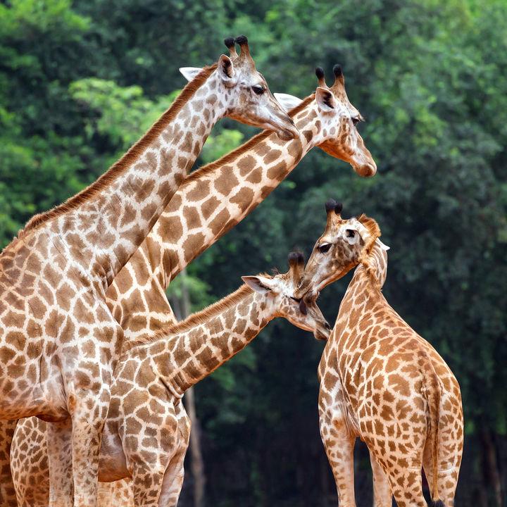 都内にある動物園のチケットの値段。入園料金のお得情報や施設情報など