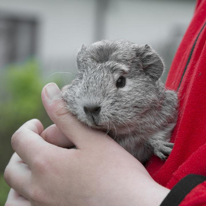 横浜の動物園に家族で行こう。動物に触れる体験で生き物を間近に感じよう