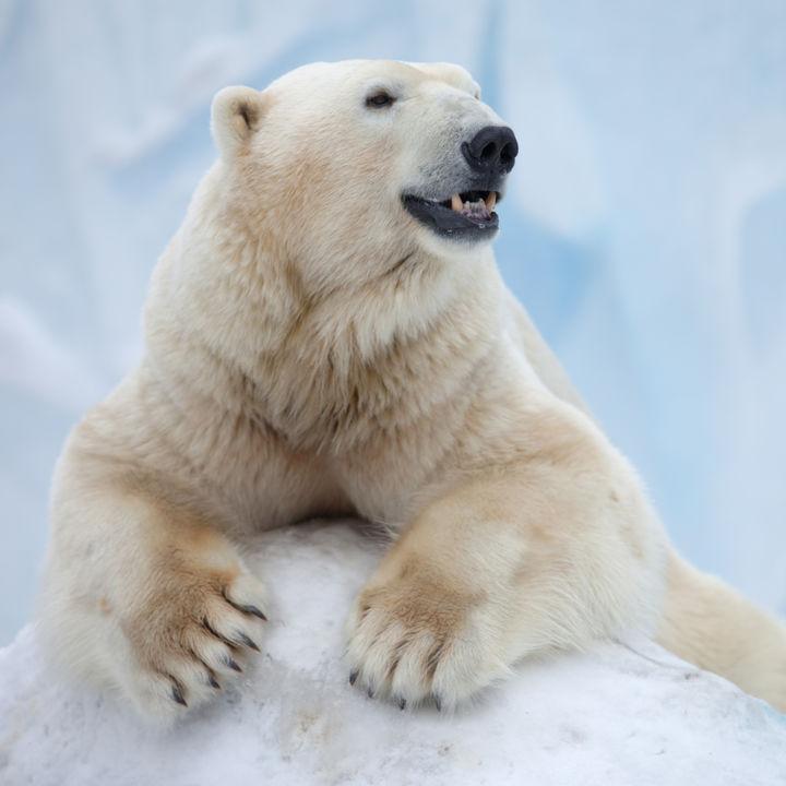 北海道で観光におすすめな動物園。旅行やおでかけに行ってみよう