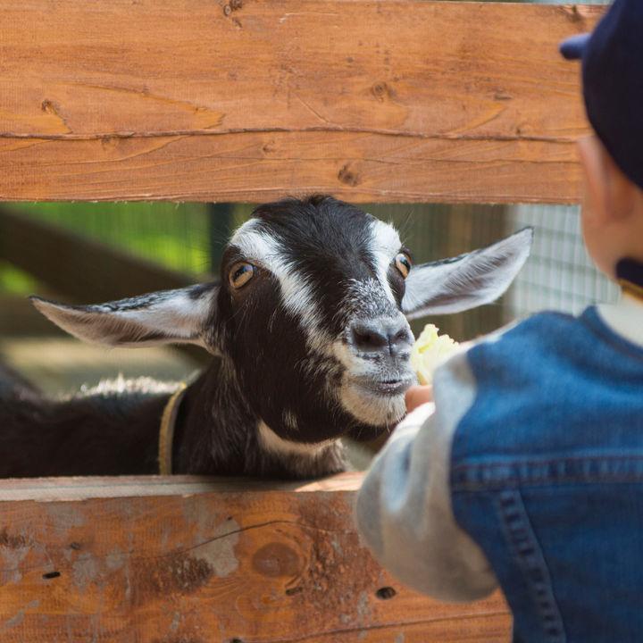 横浜周辺で生き物への餌やりが楽しめる動物園。家族のお出かけで普段できない体験をしよう