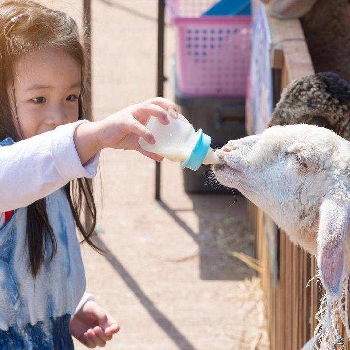 兵庫でふれあい体験ができる動物園。動物と親しんだり、生き物の観察をしよう