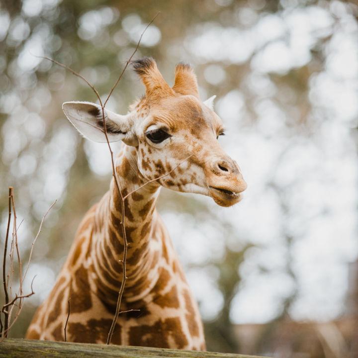 親子で楽しめる!大阪で正月に営業している動物園!