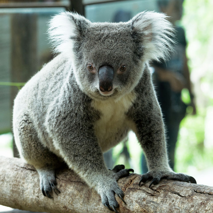 大阪周辺の動物園。さまざまな生き物の展示を親子で楽しもう