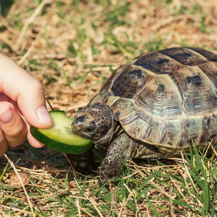 静岡県で生き物たちへの餌やりが楽しめる動物園