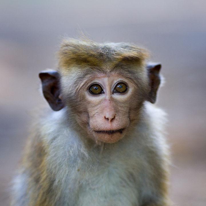 大阪周辺で猿に会える動物園に家族でおでかけ
