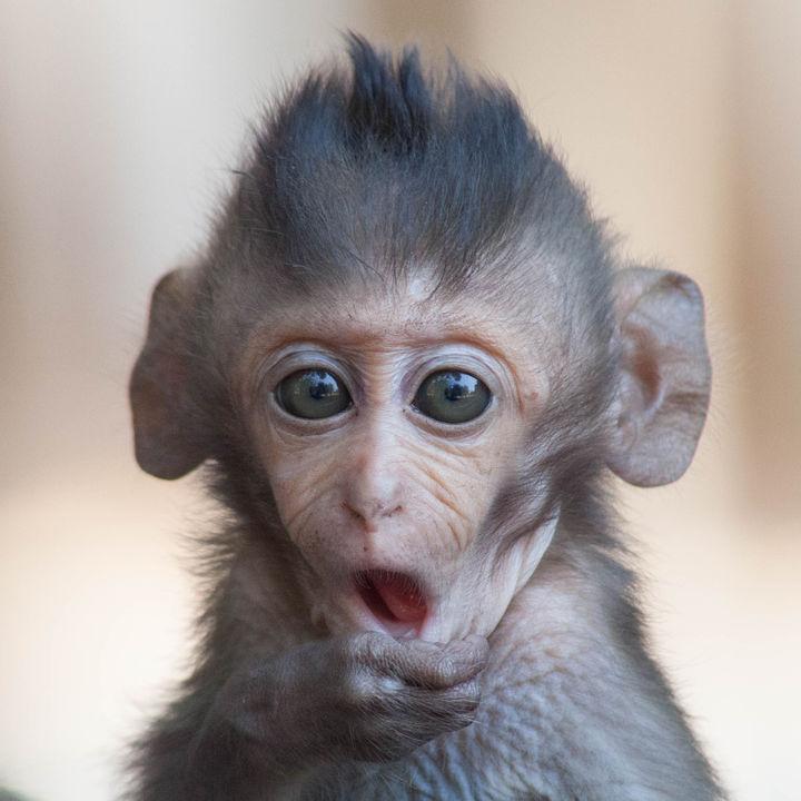 兵庫で猿に会える動物園。子どもといっしょに猿に会いにいこう